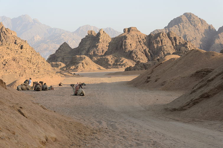 Quad Bike Riders In Desert Safari